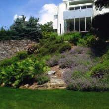 Another view of the 100' retaining wall with plantings of cotoneaster spirea, ferns and nepeta.