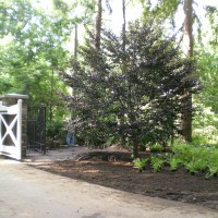 Entering this private estate in Westport, CT, the client wanted to create an immediate impression of entering natural woodland.  Plantings included large specimen trees ('Riversii' Copper Beech), 'Maxi' Rhododendrons and a carpet of ferns.