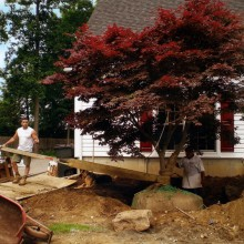 Another view of the previous tree, being transplanted in Putnam Valley, NY.