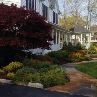 This client in Putnam Valley, NY complained that their beautiful home had no curb appeal. Our solution was to replace the existing walk with an undulating fieldstone path and filled the front gardens with a combination of evergreen and deciduous plantings that look beautiful in every season. Striking foliage color from the Japanese maple, the Spirea japonica 'Magic Carpet', the Golden Hakone Grass add color even when the Nepeta 'Walker's Low' is not in bloom. Blue Holly, Boxwood, Cherry Laurel 'Otto Luykens' and juniper add structure, greenery and berry color in the winter.
